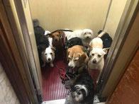 Cani e Regolamento Condominiale