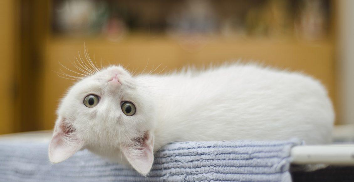 gatti randagi condominio